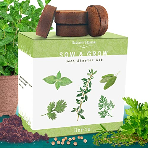 Grow 4 Bonsai Trees With Nature S Blossom Bonsai Tree Kit Makes A Unique Gift For Men And Women Great Indoor Gardening Experience For Beginners Check Out Our Other Plant Kits Buy